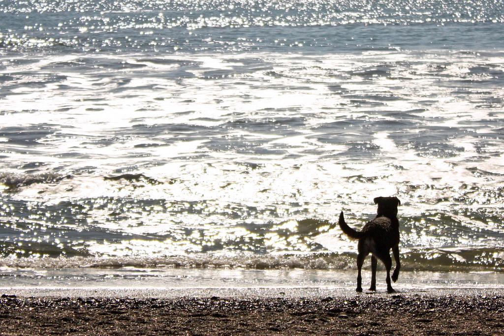 Rodeo Beach_5507251159_l