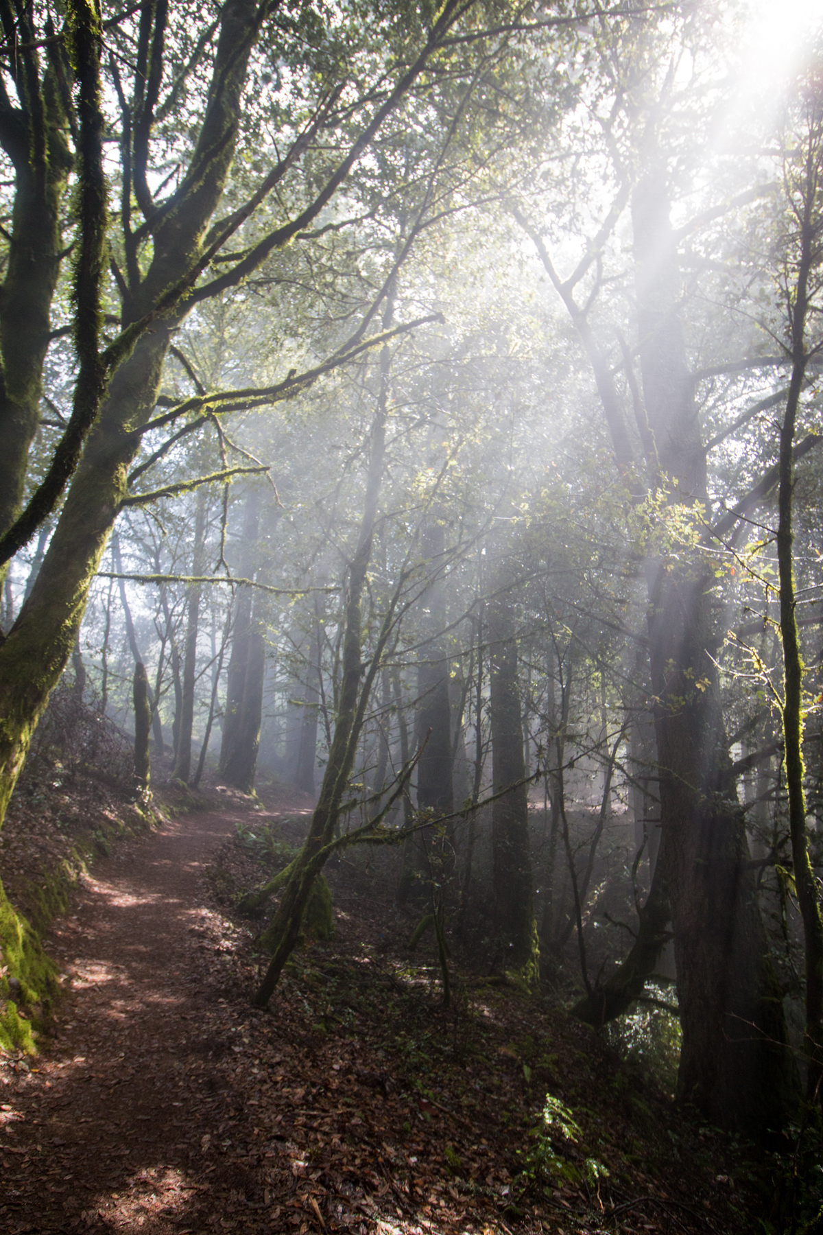 purisma_hike2