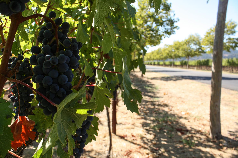 trefethen_grapes